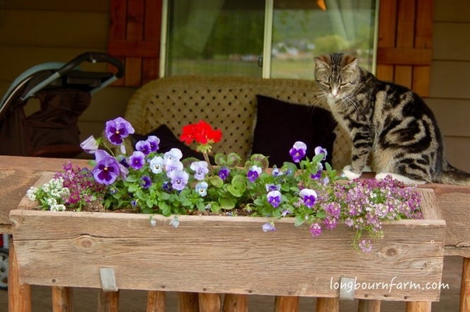 The cat and a flower box